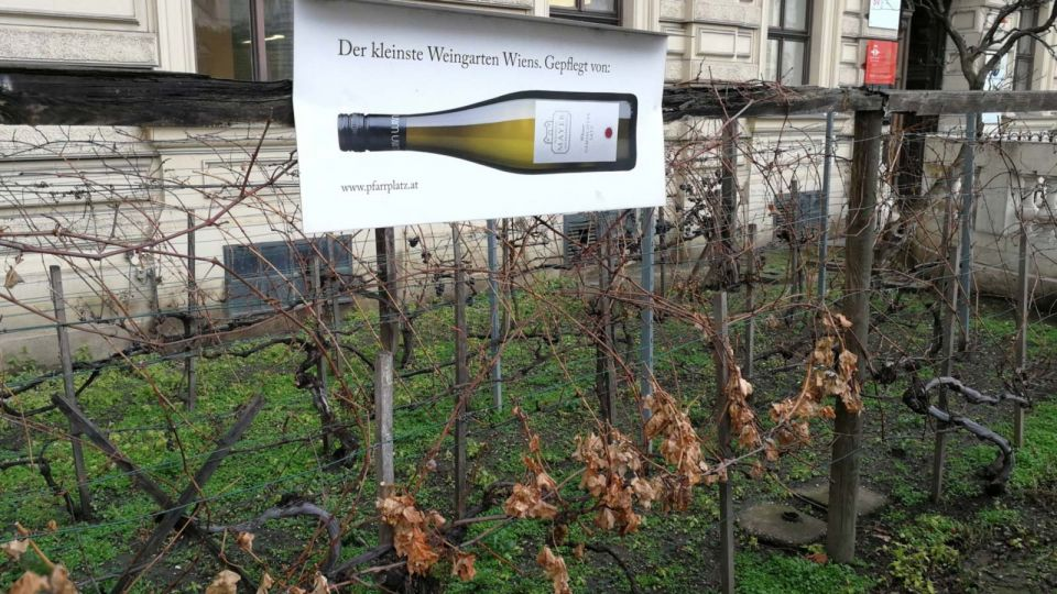 Smallest and oldest Vineyard in Vienna © echonet.at / rv
